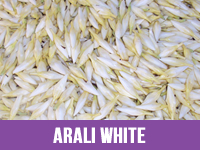 Best Fresh Arali White Flower Suppliers in India