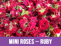 Best Fresh Ruby Flower Suppliers in India