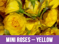 Best Fresh Yellow Flower Suppliers in India