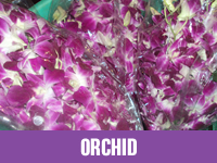 Best Fresh Orchid Flower Suppliers in India