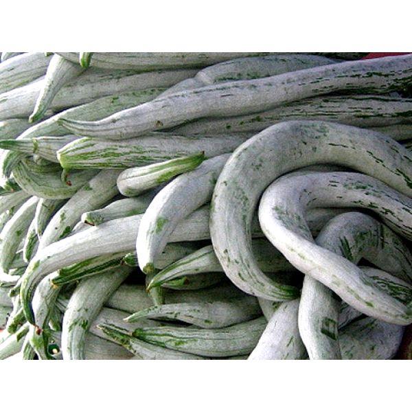 Fresh Vegetables manufacturers, Fresh Vegetables suppliers