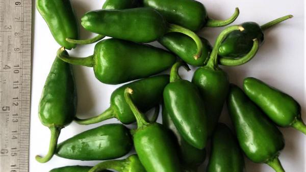Fresh Vegetables manufacturers, Fresh Vegetables suppliers, Fresh