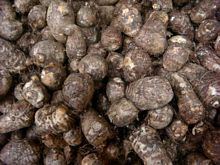 Best Fresh Colocasia Vegetables Suppliers in India